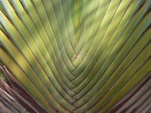 Fronda de la palma Foto de archivo libre de regalías