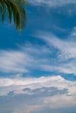 Fronda de la palma contra el cielo azul Imagen de archivo