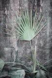 Fronda de la palma contra roca Fotografía de archivo libre de regalías