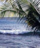 Frondas & ondas da palma fotografia de stock royalty free