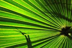 Frondas da palma Foto de Stock