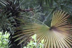 Frondas da palma Imagem de Stock