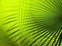 Frondas da palma Imagem de Stock Royalty Free