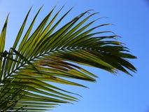 Frondas de la palma Fotografía de archivo libre de regalías