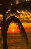 Frondas de la palma en puesta del sol Foto de archivo libre de regalías