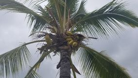 Frondas de la palmera Foto de archivo libre de regalías