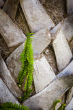 Frondas del helecho y de la palma Foto de archivo libre de regalías