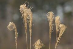 Frondas muertas de la hierba Imágenes de archivo libres de regalías