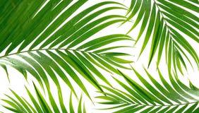 Frondas tropicales de la palma fotografía de archivo libre de regalías