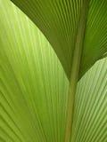 Frondas verdes Semi-abstract de la palma Imágenes de archivo libres de regalías