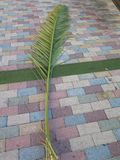 Fronde de paume sur les pavés colorés photo libre de droits