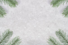 Fronde dell'albero di Natale su neve Fotografie Stock Libere da Diritti