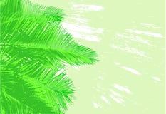 Fronde della palma Immagini Stock