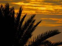 Fronde della palma con un fondo di tramonto Fotografia Stock