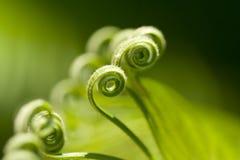 Fronde verdi ricce della palma Fotografia Stock