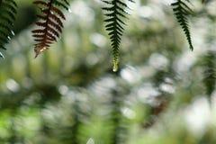 Frondes de fougère avec des gouttelettes d'eau de pluie Photographie stock libre de droits