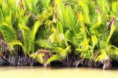 Frondes de paume au Vietnam du Sud Photographie stock