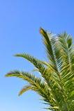 Frondes de paume sur le fond de ciel Image libre de droits
