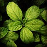 Frondoso verde fotografia stock libera da diritti