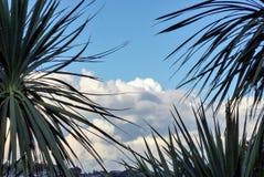 Fronds осматривают против пасмурного голубого неба Стоковые Изображения RF