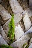 Fronds папоротника & ладони Стоковое фото RF