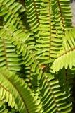 fronds папоротника Стоковое Изображение RF