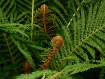 Fronds, Fern, Green, Plant Royalty Free Stock Photography