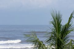 Fronds of a large palm tree stand before the Pacific Ocean as the sun breaks through after Tropical Storm Nate passes through at P Royalty Free Stock Image