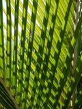 fronds nikau palma tropikalna zdjęcie royalty free