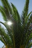 Fronds of a plant. Sun shining through the fronds of a plant stock photo