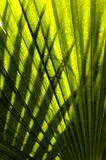 Fronds and Shadows. Palm frond becomes screen for a shadow play by another palm frond Royalty Free Stock Photo