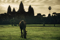In front of the Angkor wat royalty free stock image