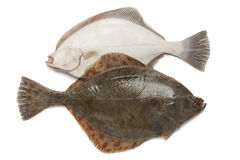Front and back of fresh  European flounders Royalty Free Stock Image