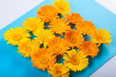 Front Calendula Royalty Free Stock Images