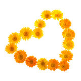 Front Calendula Love Shape Royalty Free Stock Images