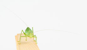 Front close up of katydid Stock Image