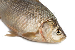 Front of the Crucian carp Stock Photo
