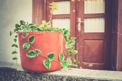 Front door planters Stock Photography