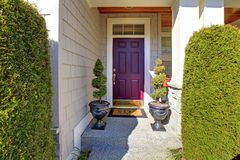 Front door in purple plum color Royalty Free Stock Image