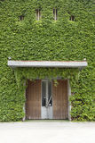 Front door surrounded by ivy wall Royalty Free Stock Photos