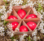 Front - Easter Eggs Stock Photos