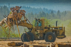 Front end loader lifting logs Royalty Free Stock Photos