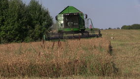 Front of farm machinery harvest combine work thrash corn field stock video footage
