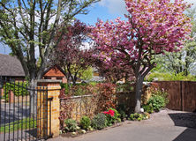 Front Garden in Blossom Stock Photography