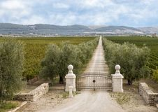 The front gate and white gravel road leading to Tomaresca Tenuta Bocca di Lupo. Pictured is the front gate and the white gravel road leading to  the winery Royalty Free Stock Photos