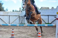 Front Horizontal View Of A Brown Horse Jumping The Obstacle Stock Photo