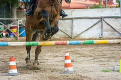 Front Horizontal View Of A Brown Horse Jumping The Obstacle Stock Images