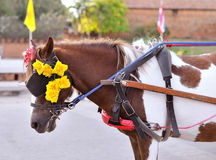 In front of horse carriage Royalty Free Stock Images