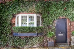 Front house covered  green ivy Stock Images