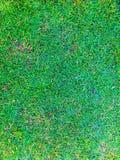 Front Lawn Imágenes de archivo libres de regalías